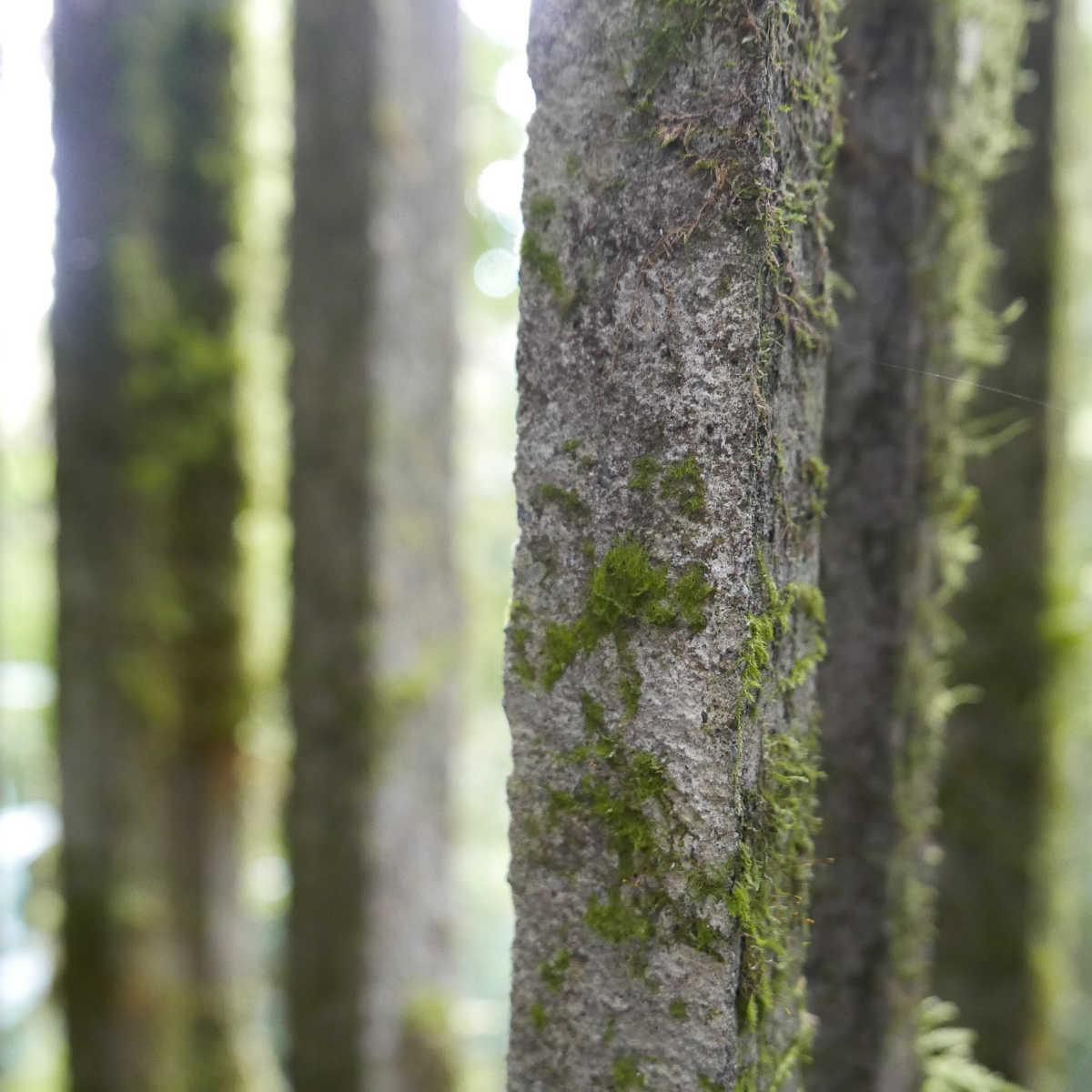 Close-up of a column in Las Pozas surrealist garden in Xilitla