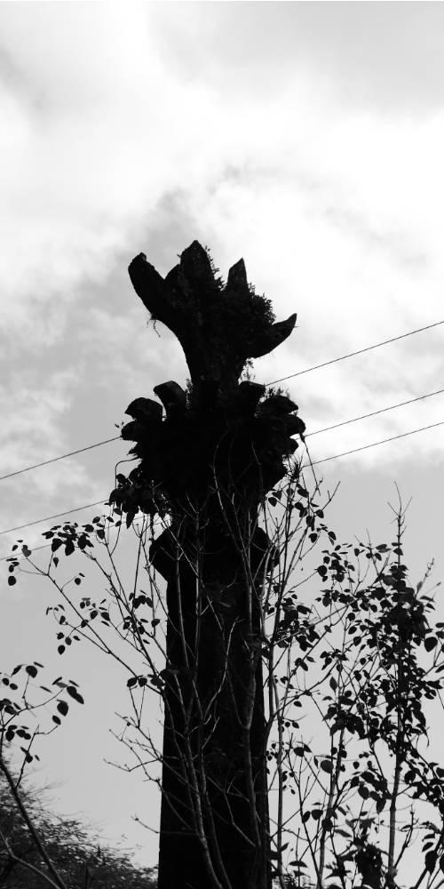 Entrance column in Las Pozas surrealist garden in Xilitla