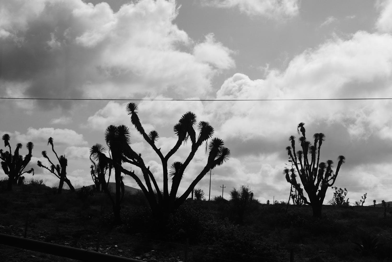 Dreamscapes. Desert Mexican heartland towards Queretaro, looks almost like the iconic Joshua Tree album cover by U2