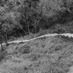 Pathway to the mountain top near Jinotega, Nicaragua