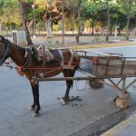 Donkey on the way to the beach in Granada, Nicaragua