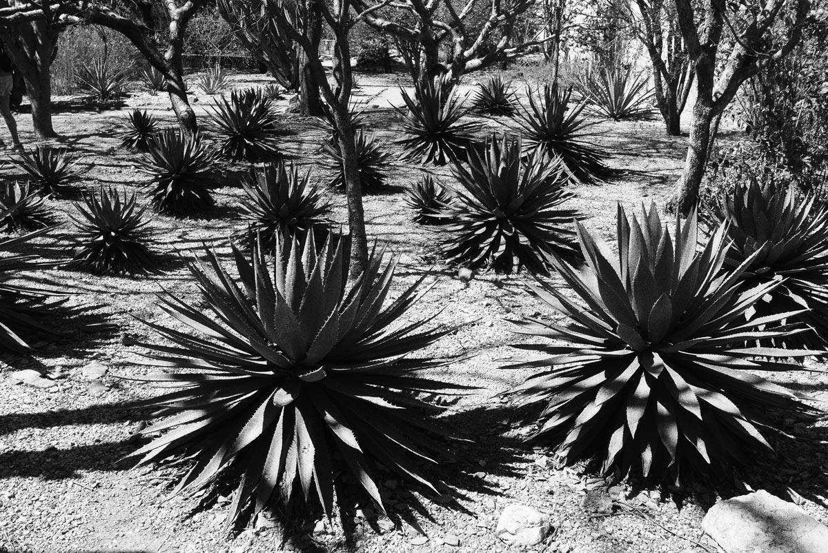 Botanical garden in Oaxaca city