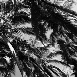 Palm trees near Playa Principal in Puerto Escondido
