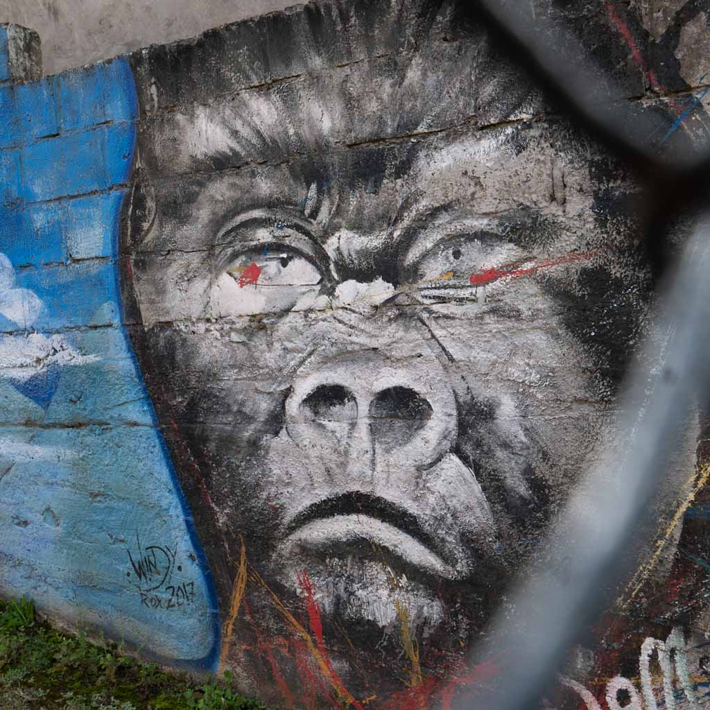 Street art in Banos: gorilla
