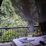 Bedroom in the Rio Claro jungle