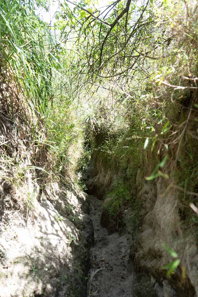 Narrow muddy path during the descent on day two, near the white cliffs
