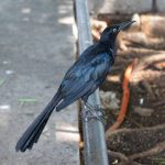 Sparrow in park in Merida